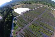 Ολυμπιάδα: Πανοραμική όψη του φυτωρίου