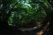 Σκουριές: Το δάσος θα ξαναγίνει δάσος με βάση την αρχή της παράλληλης αποκατάστασης